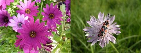 theme-floral-2