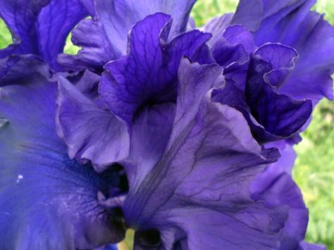 090510-iris2