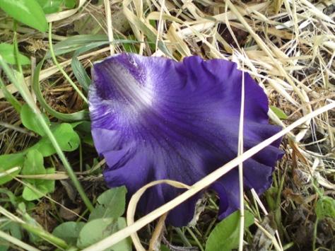 090510-iris4