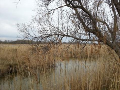 étang du Méjean