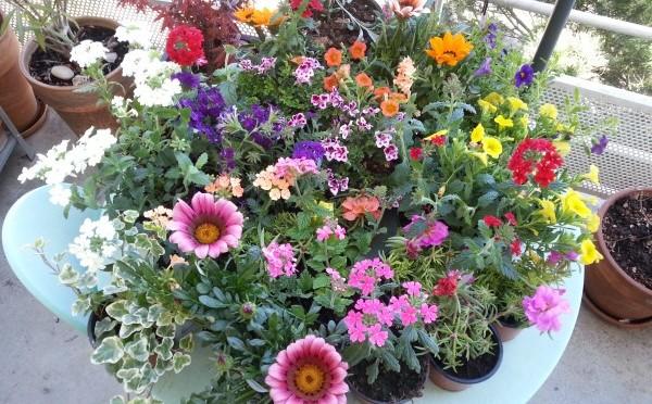 Les fleurs et moi…