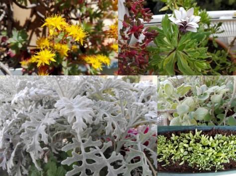 Plantes-e1458056760103