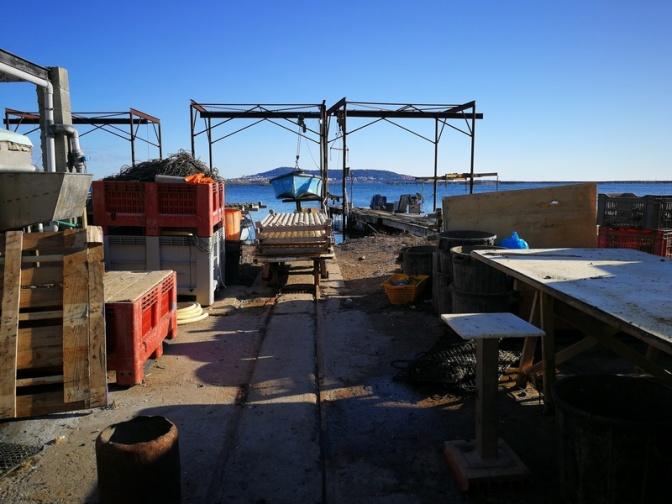 Virée chez un aquaculteur de Bouzigues